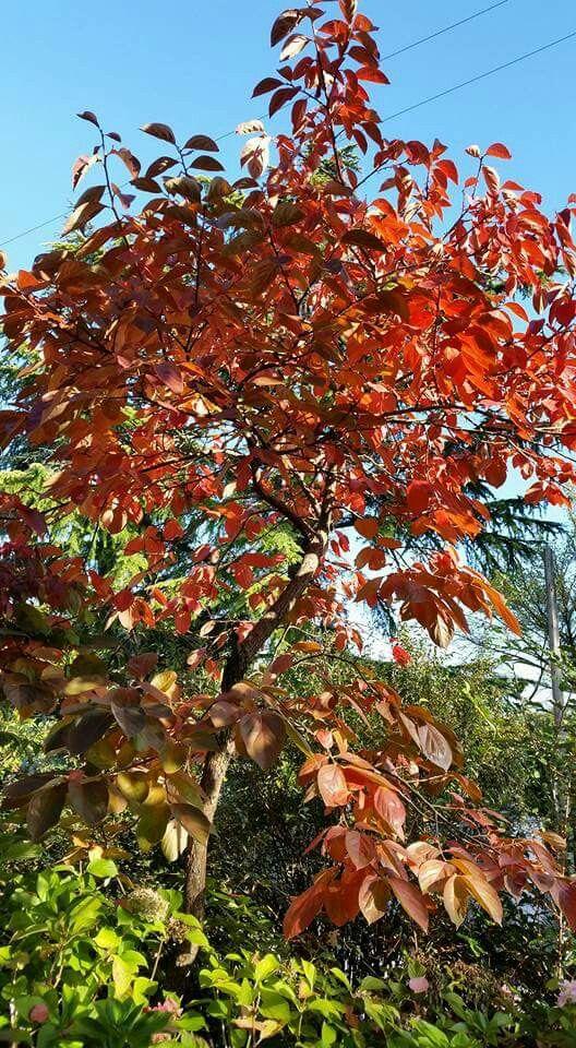L'autunno di Agos Maria Freschi