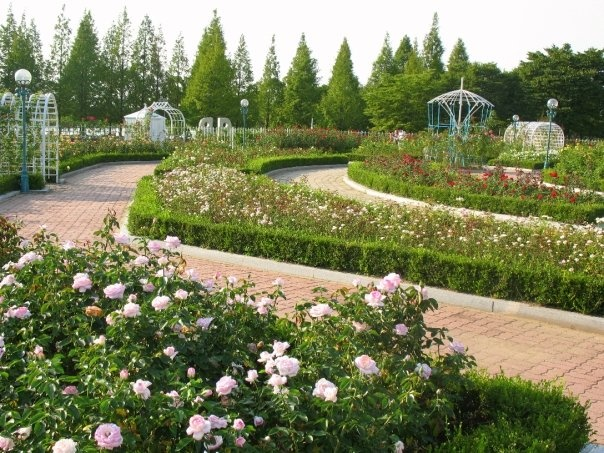 beautiful flower garden, Lake Park, Ilsan City, Korea