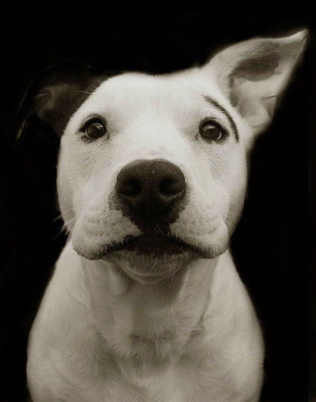 Портреты собак из книги Трэер Скотт «Собаки из приюта»