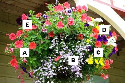 Container Garden Recipes: A = Petunia, B = Lobelia, C = Marigold, D = Annual Phlox, E = Pansy: Names of flowers: A = Petunia, B = Lobelia, C = Marigold, D = Annual Phlox, E = Pansy  Coral pink gives continuity to this combination of annuals for full