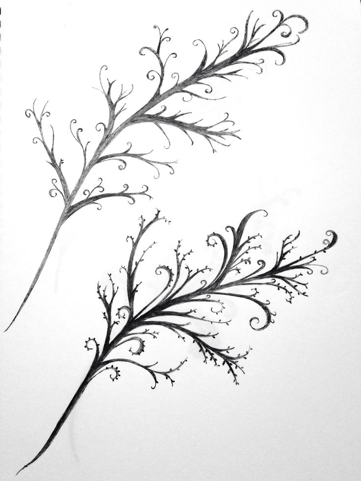 Bare branch doodle