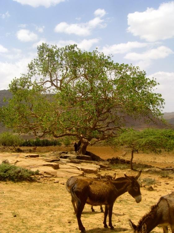Mekelle, Ethiopia (May 2012)