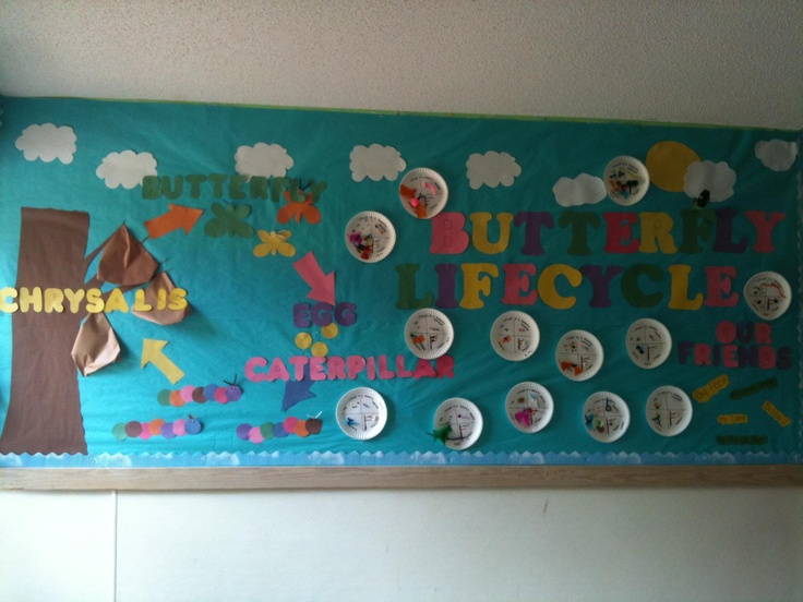 butterfly lifecycle bulletin board