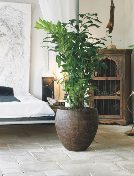 Add a natural look to a modern space to break up a mundane area. See more at www.greendesign.com.au