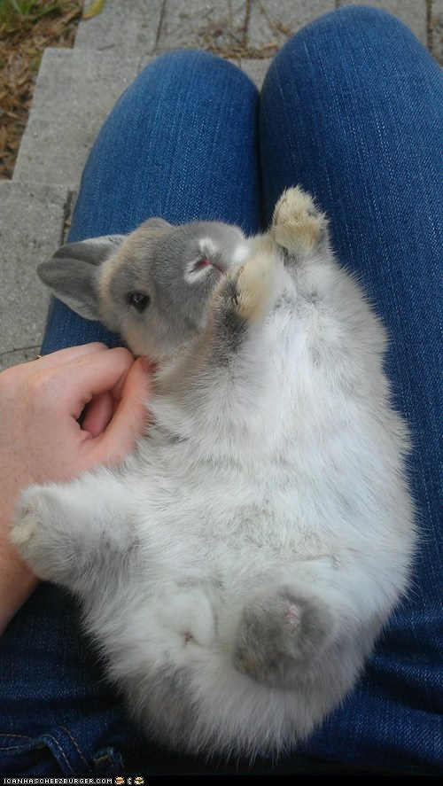 Magic bunny touch. Some people have big goals in life. Me, I just wanted to pet a bunny behind the ear. Dream big.