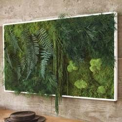 Fern and Moss Wall Art Live plants that have been preserved for wall art. Hang vertically or horizontally!