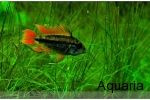 The Complete Fish Store,Aquarium,Planted aquarium,Marine aquarium,fish tank,discus fish sale,cichlid fish,tropical fish,tetra fish,arowana fish,marine fish,online fish store,butterfly fish,vastu fish,Chennai - http://www.aquaria.in