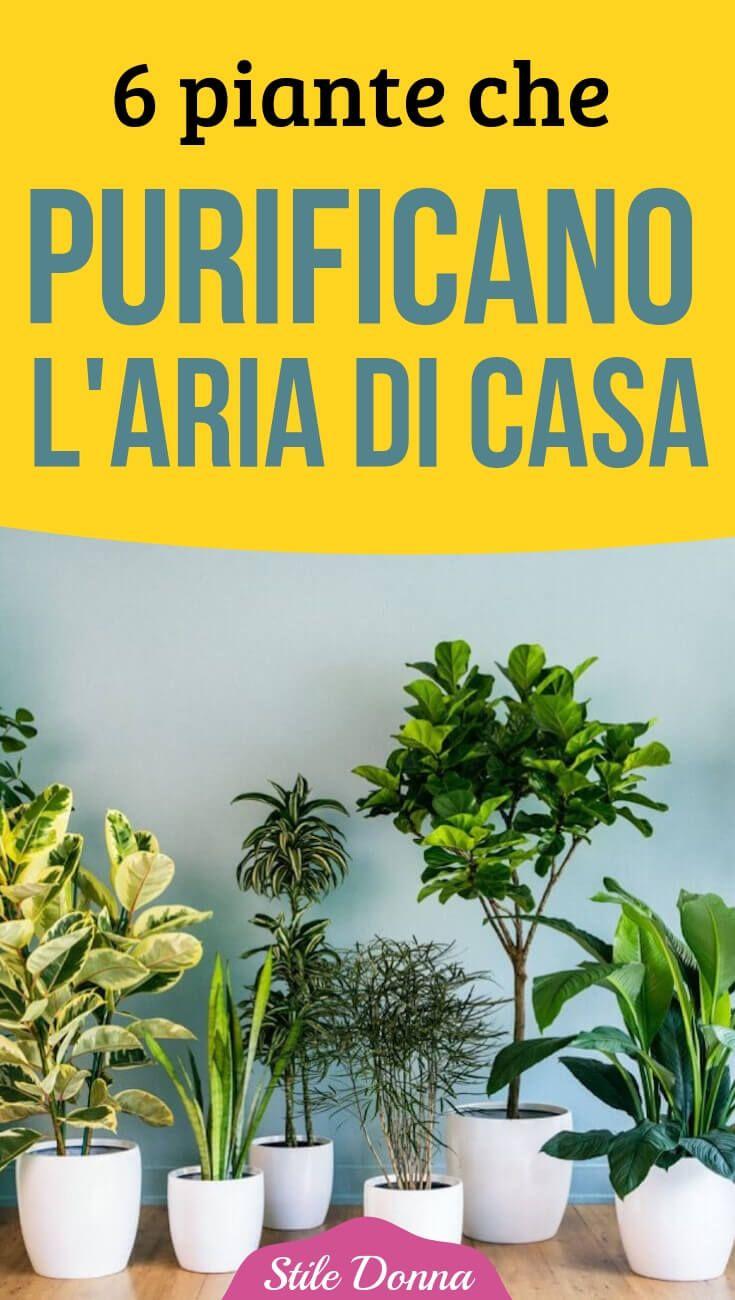 Piante Da Appartamento Ambiente Buio 6 piante da tenere in casa che purificano l'aria | piante