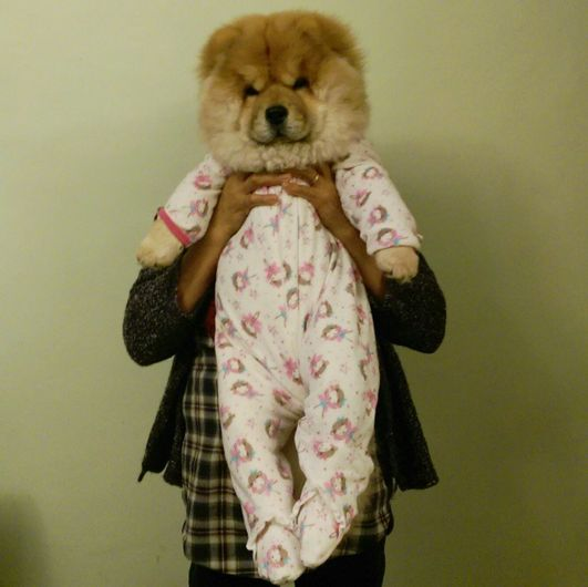 And this is the ideal baby. | Community Post: Drop Everything You're Doing And Follow This Stylish Chow Chow On...