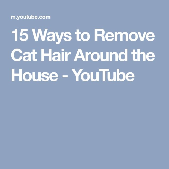 15 Ways to Remove Cat Hair Around the House - YouTube