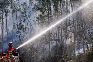 Defesa da Mata Nacional do Bussaco é uma das preocupações dos bombeiros