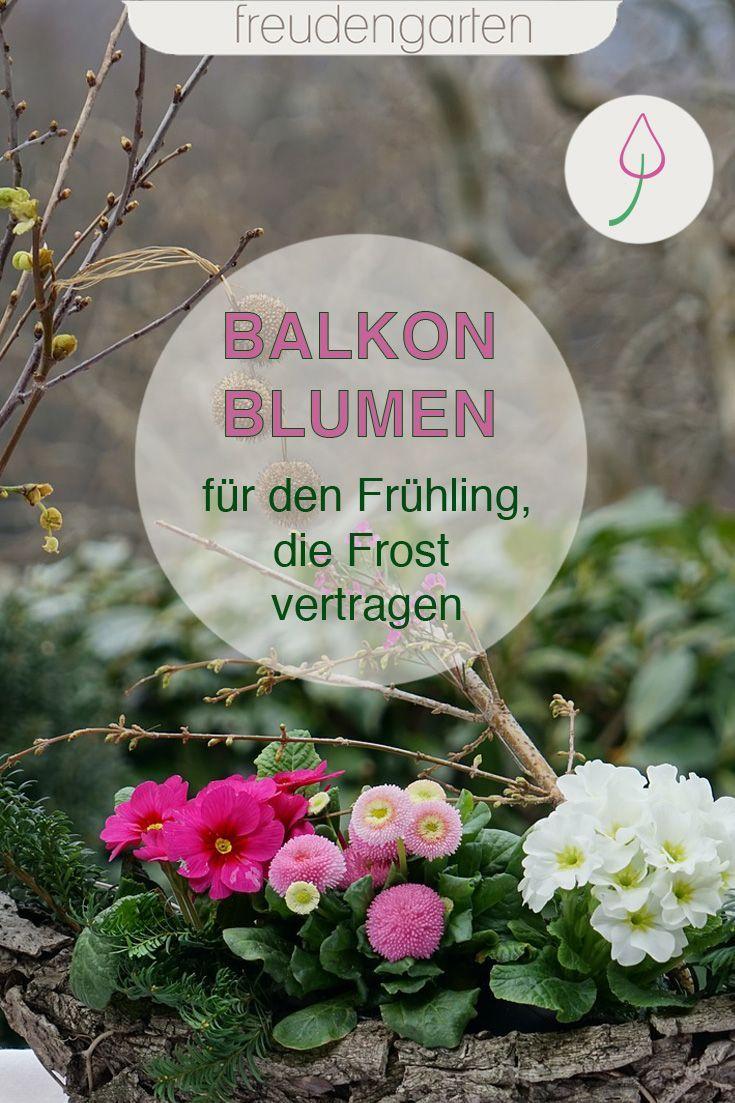 balkonpflanzen märz