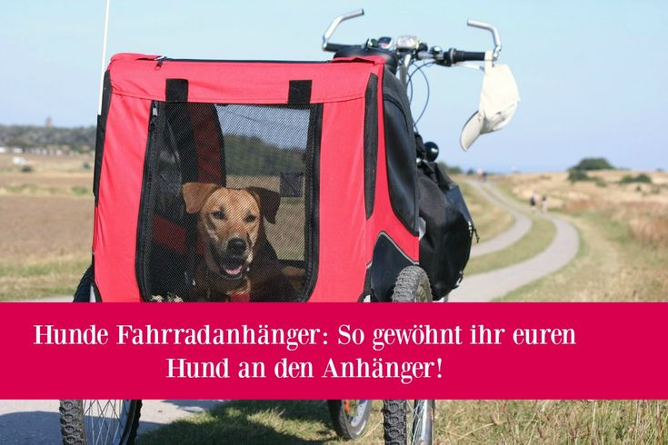 Hunde Fahrradanhänger Hund gewöhnen