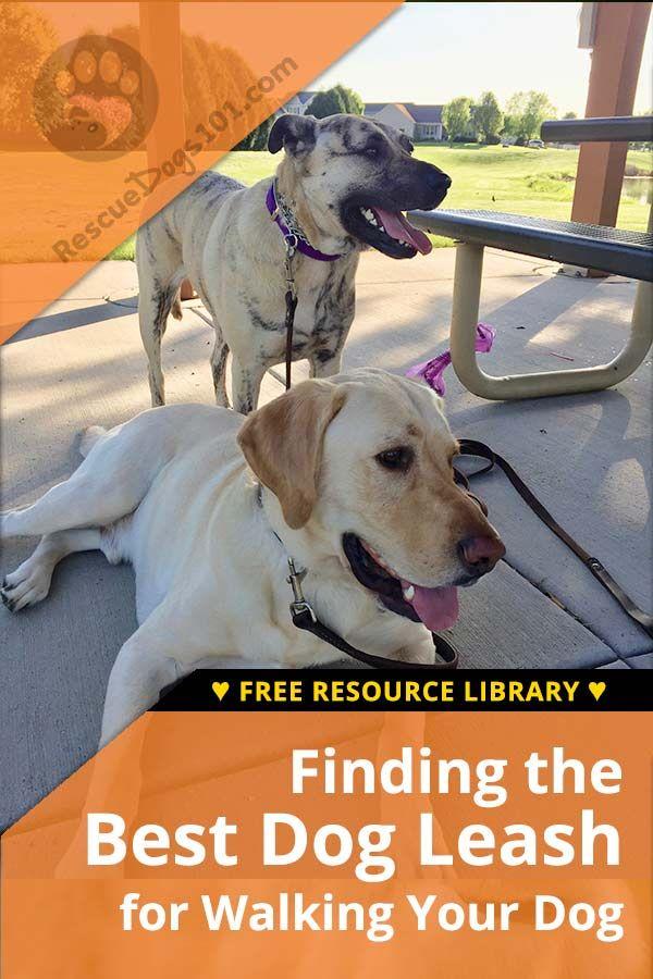 How To Choose The Best Dog Leash Dog Leash Dog Training Tools
