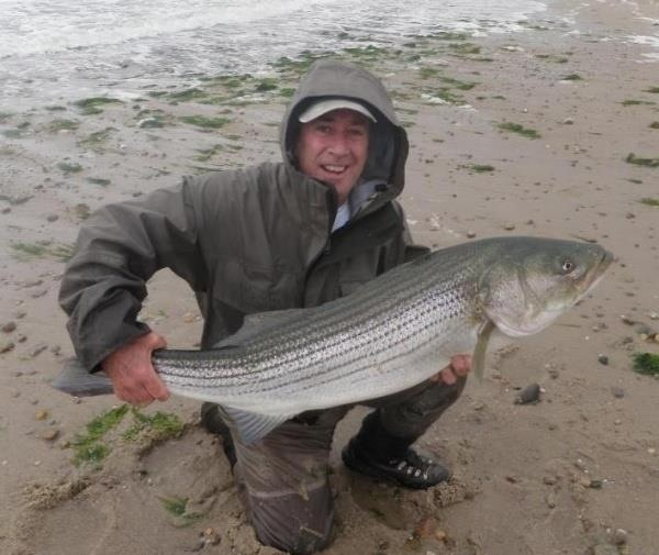 Striper caught on a fly fly fishing pinterest fly for Striped bass fishing tips