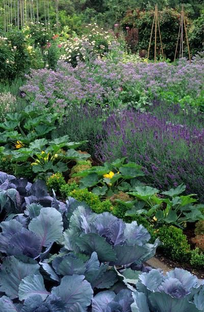 lavender in the potager...  // Great Gardens & Ideas //