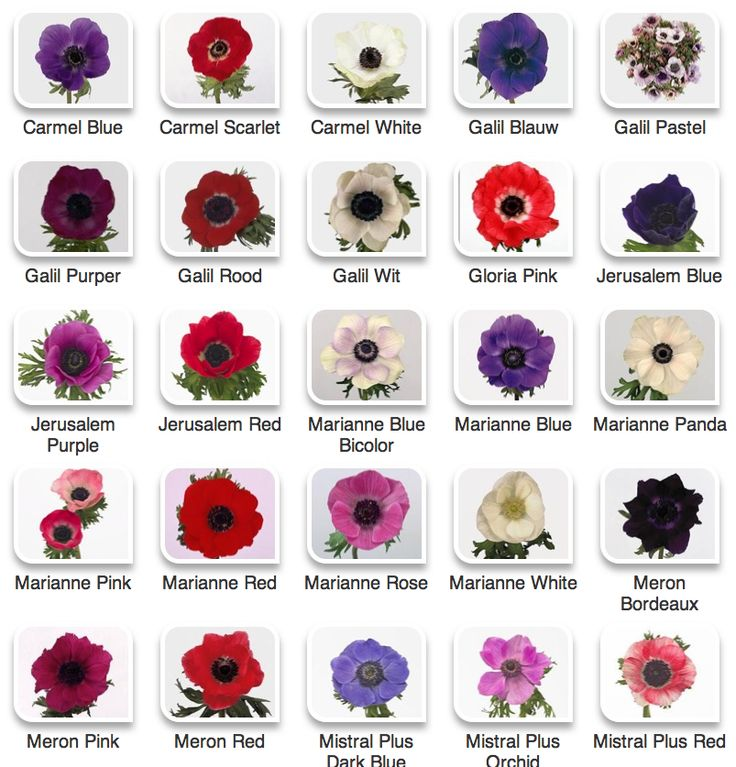 Anemones - a beautiful spring flower that creates a great vintage look to bouquets and arrangements.