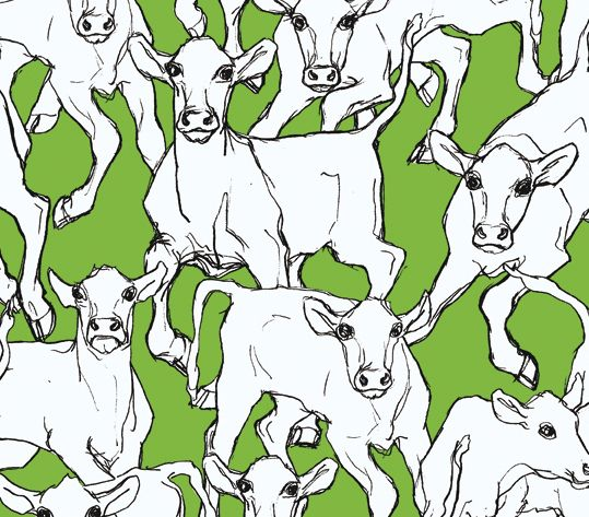 Marimekko cow wallpaper? I love this, but there is dissent in the ranks.