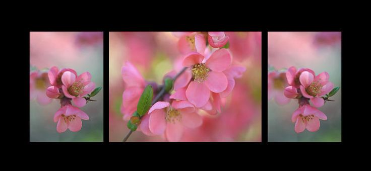 The Tender Spring Blooms. Triptych On Black by Jenny Rainbow