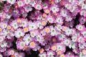 赤いバラのオベリスク-無料写真素材PAKUTASO/ぱくたそ