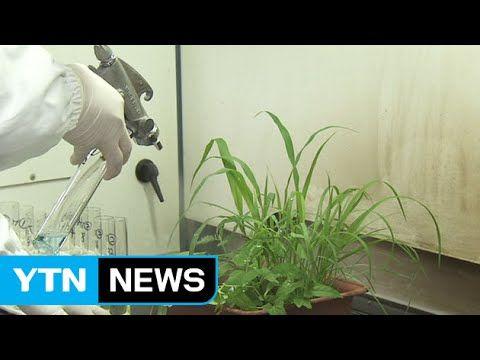 잡초만 모두 잡는 친환경 제초제 개발 / YTN - YouTube