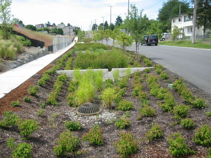 8 best swale images on pinterest rain garden landscape design and google images - Urban gardening in contaminated areas ...