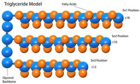 Giải quyết các dạng axit béo trung tính bằng trái bưởi - hiệu quả đốt cháy mỡ thừa có 1 không hai