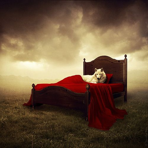 Sarolta Bán, field, white wolf, red comforter, little red riding hood, surreal, creepy, cloudt skies,