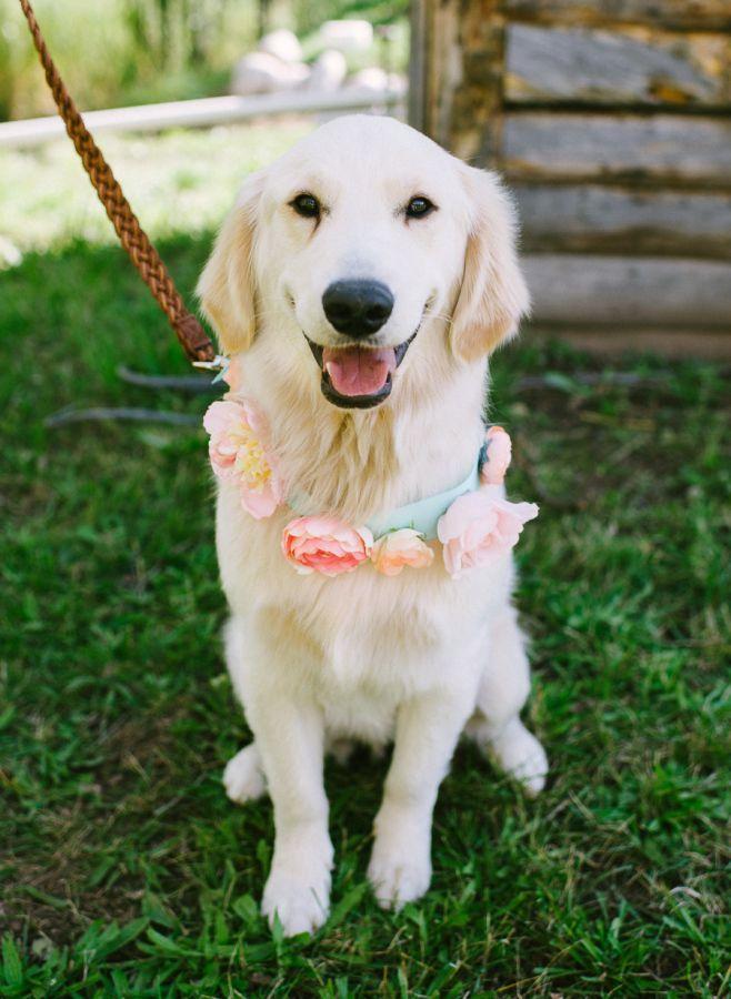 Vintage Rustic Fall Steamboat Springs Wedding Dog Wedding Pet