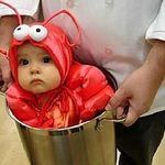 *baby lobster. (i do hope the baby was removed from the bucket right after the pic was taken. that baby is a good sport!*