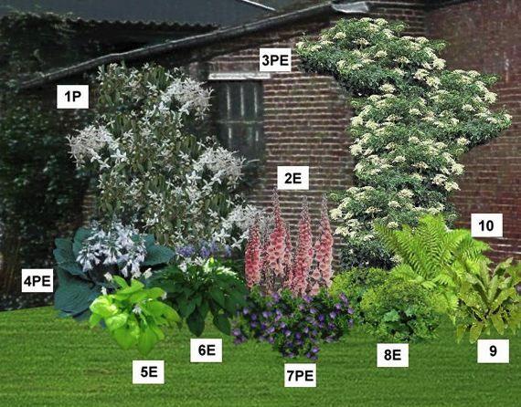 Mur fleuri ombre/mi-ombre - Pépinière, plantes, jardinerie, achat en ligne - via http://bit.ly/epinner