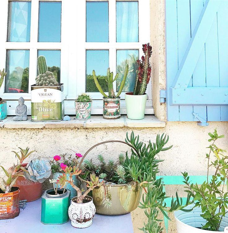 Poco a poco la casa vuelve a estar en orden y sus plantas también! Feliz domingo!! #soyunmixplantasfan #lacasademechi