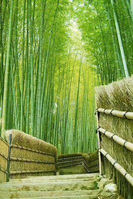 Verdant, rustic, and beautiful. Kyoto, Japan 京都