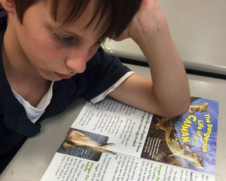 Engaging With Nonfiction: The Power of a Paper Plate