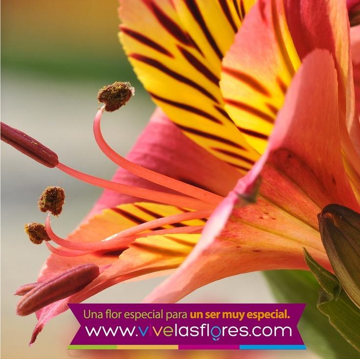 Orange & Pink by Vivelasflores.com