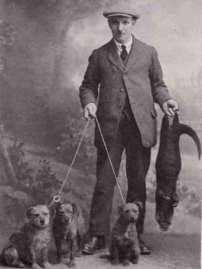 Olden times border terriers