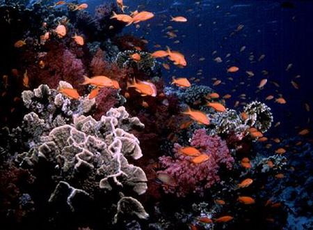 Beautiful coral reef around the world: Coral, Beautiful Coral, Around The World, Coral Reefs