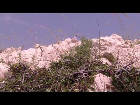 Przyroda w Chorwacji https://www.youtube.com/watch?v=ACXSQt36CKk #chorwacja #croatia