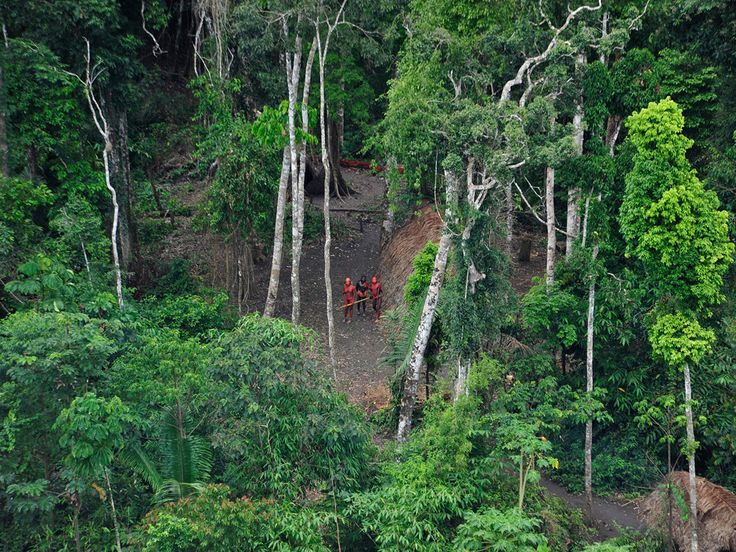 """Amazon Rainforest Tribe First Contact: Could Face """"Tragedy"""" And ..."""