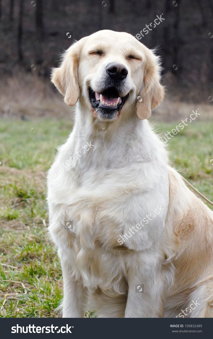 Cartoon dog stock photos images amp pictures shutterstock - Dog