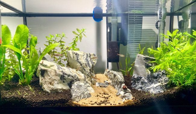 10 Gallon Planted Tank Low Tech Setup Ideas Stocking Lights Substrate 10 Gallon Fish Tank Fish Tank Aquarium Setup