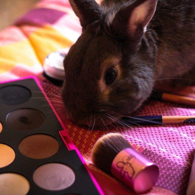 Makeup is better than carrots! Thank you @Soponga for this lovely pic of your bunny Jack!  Tag #PetsLoveNeve to be featured.    #makeup #nevecosmetics #makeuplover #pets #love #neve #wakeupandmakeup #animals #vegan #crueltyfree #vegetarian #cosmetics #italy #uk #pastelloeyeliner #elegantissimi #palette #brush #kabuki