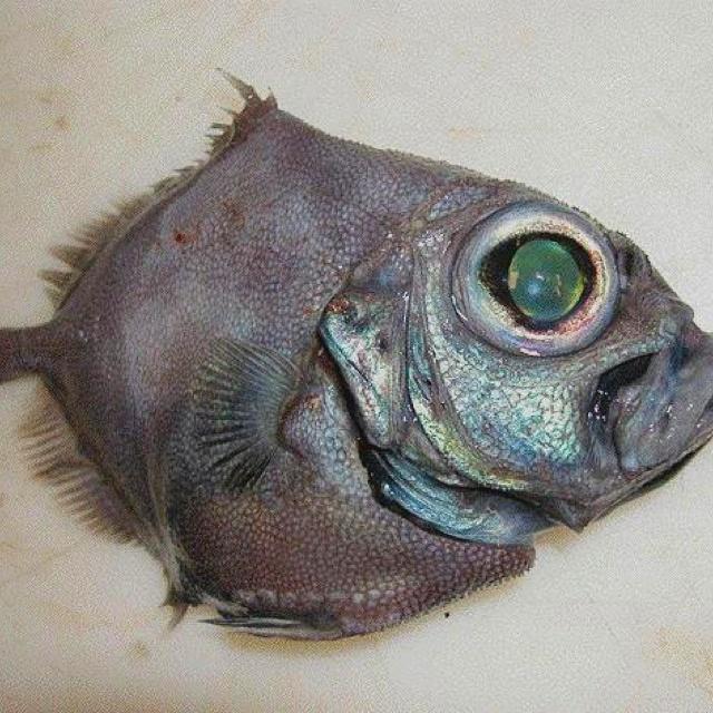 40 best deep sea creatures images on pinterest for Weird deep sea fish