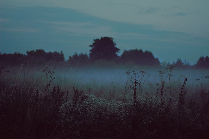 My meadow - Nishe