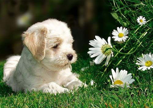 "(""SO...YOUR SAYING....SHE LOVES ME THEN?"") * * You gotta pluck the petals, pup.)"