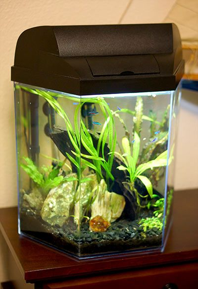 This is a really hlepful article about setting up a small fish tank. The person actually knows both about caring for fish, and setting up an attractive looking aquarium. Spent 20 minutes looking through my internet history to find again. Pinning, so I don't lose it!