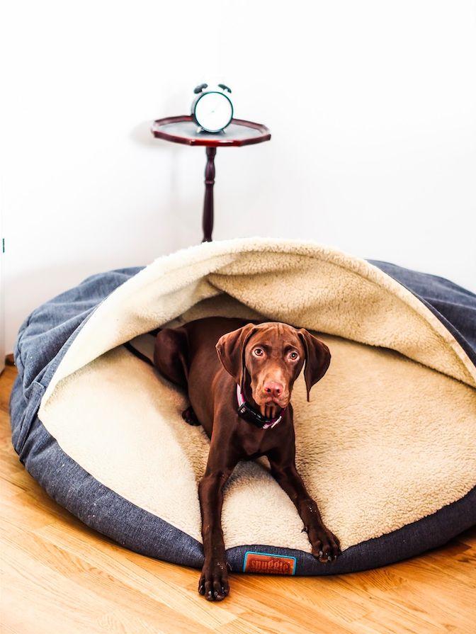 DAS PERFEKTE HUNDEBETT: Unsere SNUGGLE DREAMER Review + 10% Rabattcode für eine Kuschelhöhle für deinen Vierbeiner