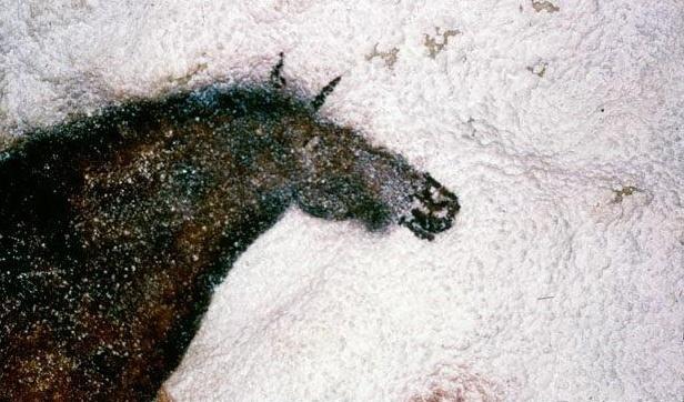Лошадь в пещере Ласко (Франция). © Hans Hins. #Horse #Horses #Lascaux