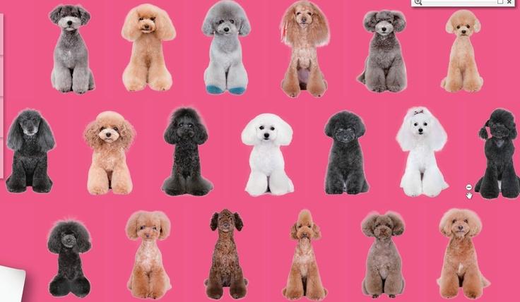Japanese Dog Grooming Styles Dog Grooming Pinterest