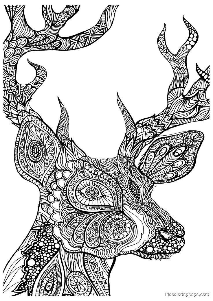 Advanced Coloring Pages Of Animals Coloring Home Home Furniture